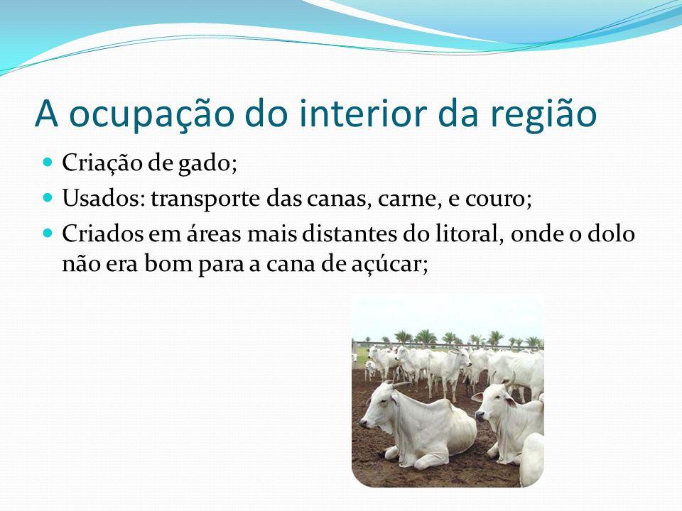 A ocupação do interior da região Criação de gado; Usados: transporte das canas, carne, e couro; Criados em áreas mais distantes do litoral, onde o dol