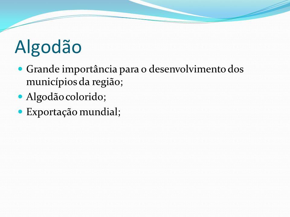 Algodão Grande importância para o desenvolvimento dos municípios da região; Algodão colorido; Exportação mundial;