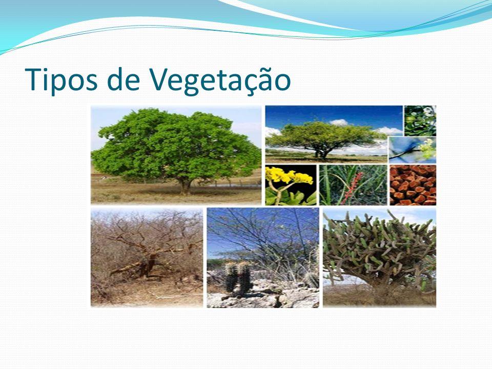 Tipos de Vegetação
