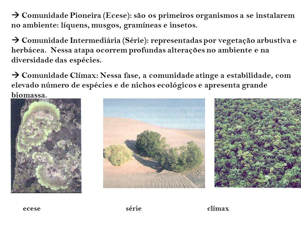 Comunidade Pioneira (Ecese): são os primeiros organismos a se instalarem no ambiente: líquens, musgos, gramíneas e insetos. Comunidade Intermediária (