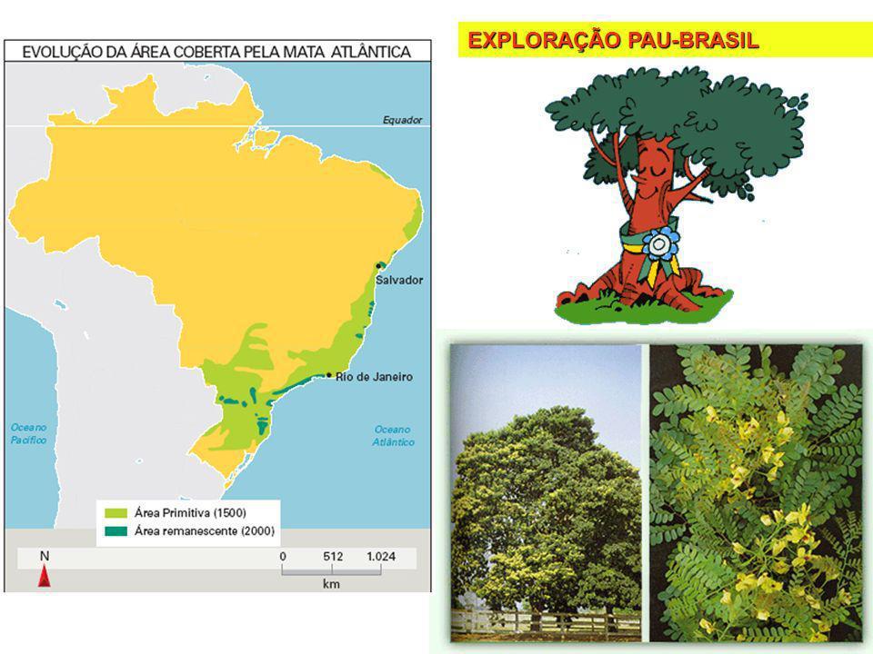 EXPLORAÇÃO PAU-BRASIL