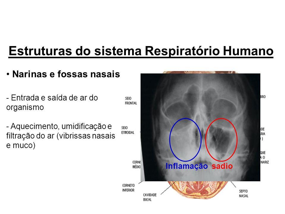 Narinas e fossas nasais - Entrada e saída de ar do organismo - Aquecimento, umidificação e filtração do ar (vibrissas nasais e muco) Estruturas do sis
