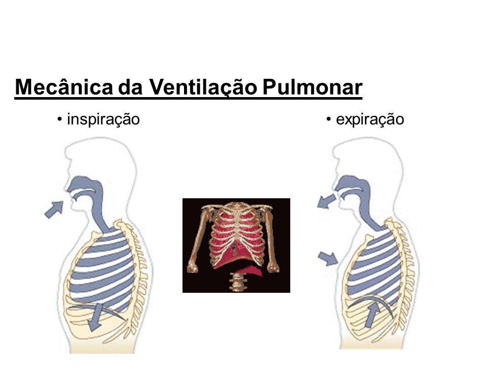 Mecânica da Ventilação Pulmonar inspiração expiração