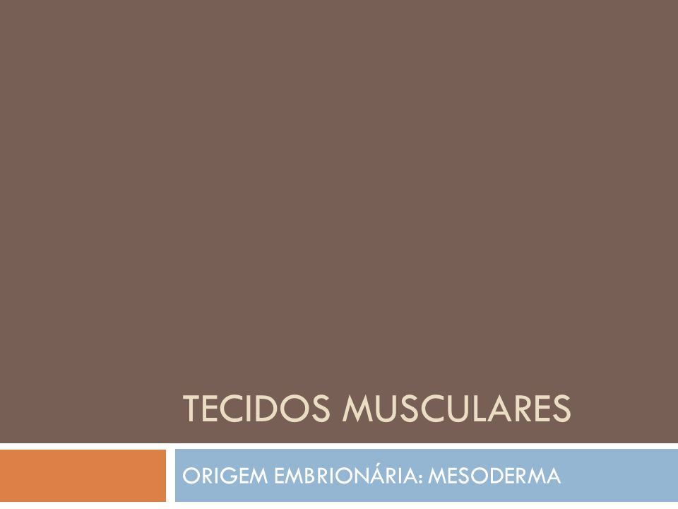 TECIDOS MUSCULARES ORIGEM EMBRIONÁRIA: MESODERMA