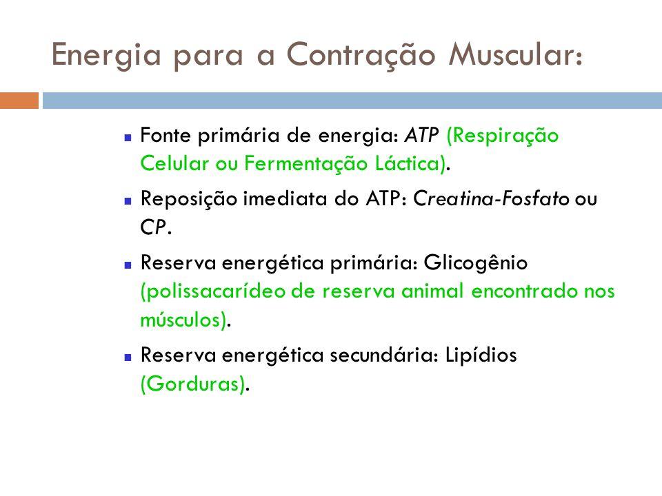 Energia para a Contração Muscular: Fonte primária de energia: ATP (Respiração Celular ou Fermentação Láctica). Reposição imediata do ATP: Creatina-Fos