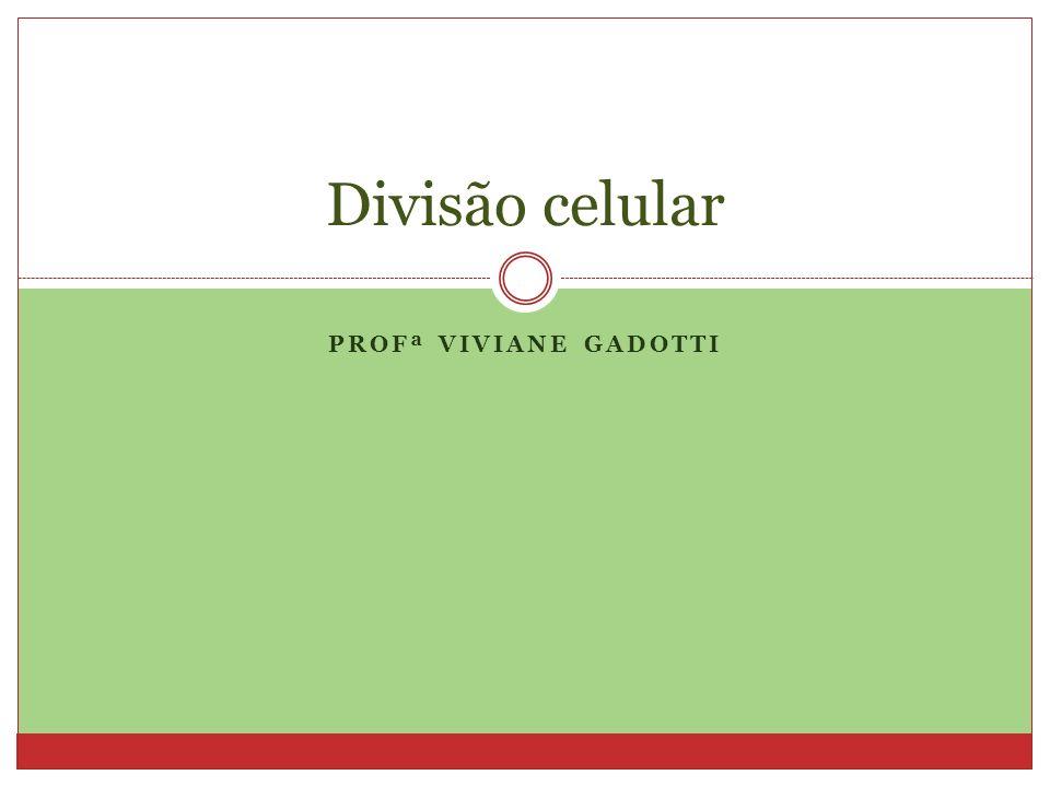 PROFª VIVIANE GADOTTI Divisão celular