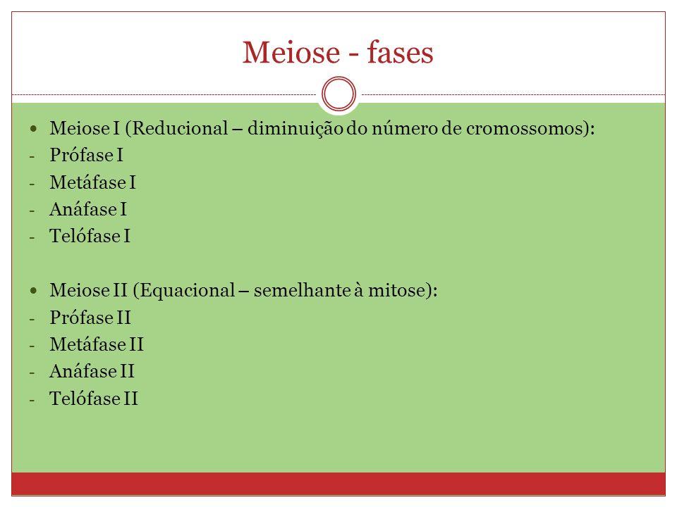 Meiose - fases Meiose I (Reducional – diminuição do número de cromossomos): - Prófase I - Metáfase I - Anáfase I - Telófase I Meiose II (Equacional –
