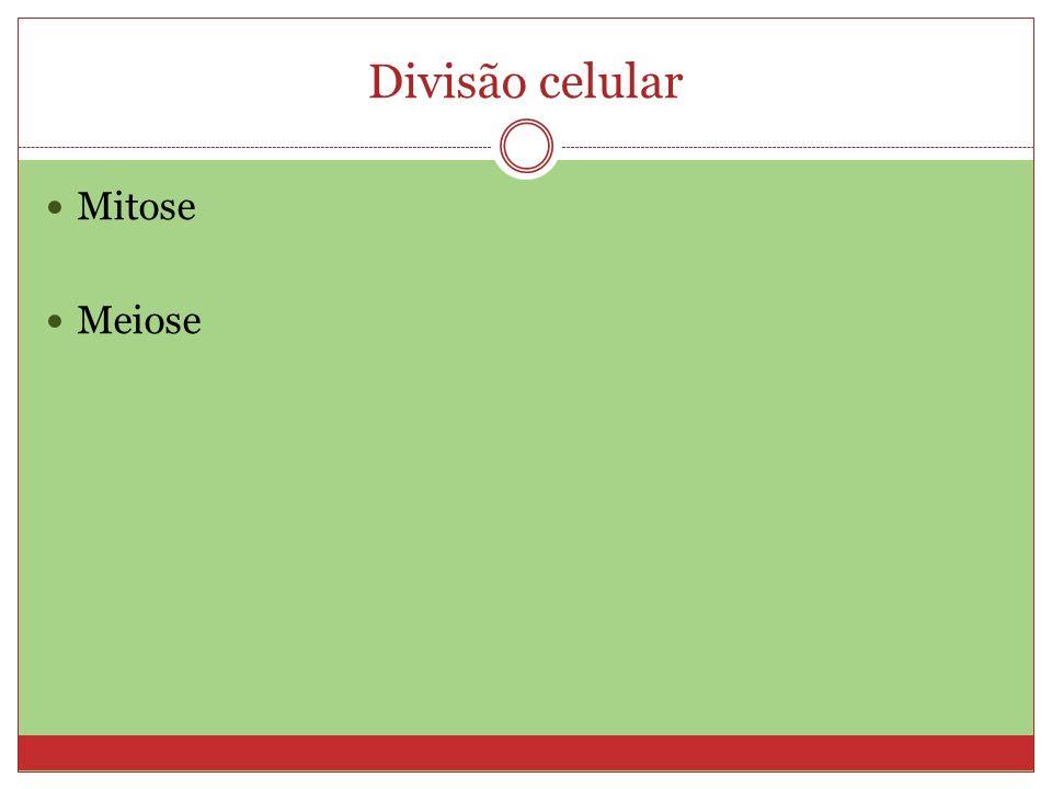 Resultado da Mitose Duas células filhas, com o mesmo número cromossômico da célula mãe.