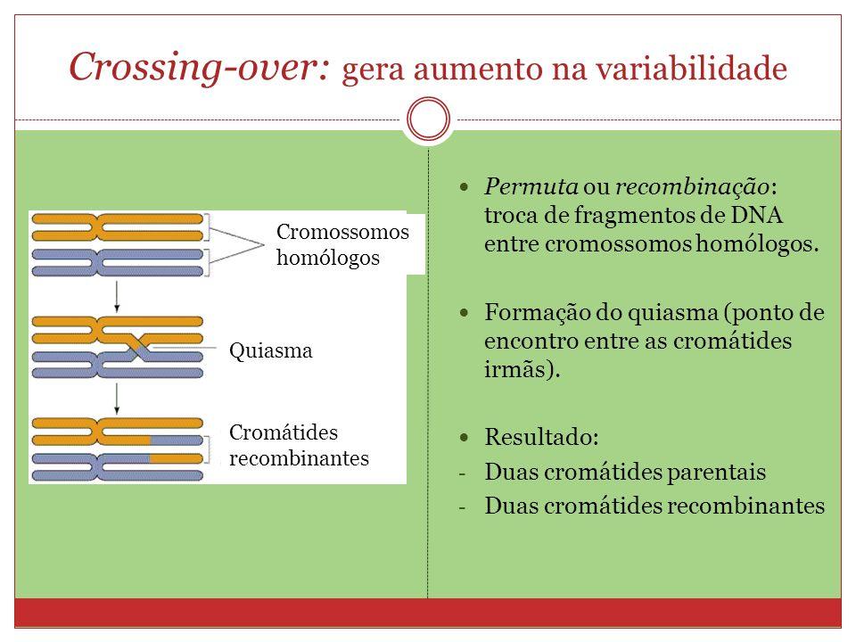 Crossing-over: gera aumento na variabilidade Permuta ou recombinação: troca de fragmentos de DNA entre cromossomos homólogos. Formação do quiasma (pon
