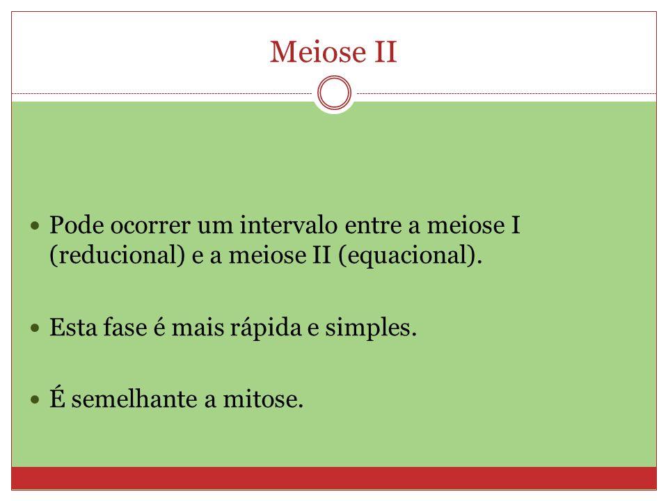 Meiose II Pode ocorrer um intervalo entre a meiose I (reducional) e a meiose II (equacional). Esta fase é mais rápida e simples. É semelhante a mitose