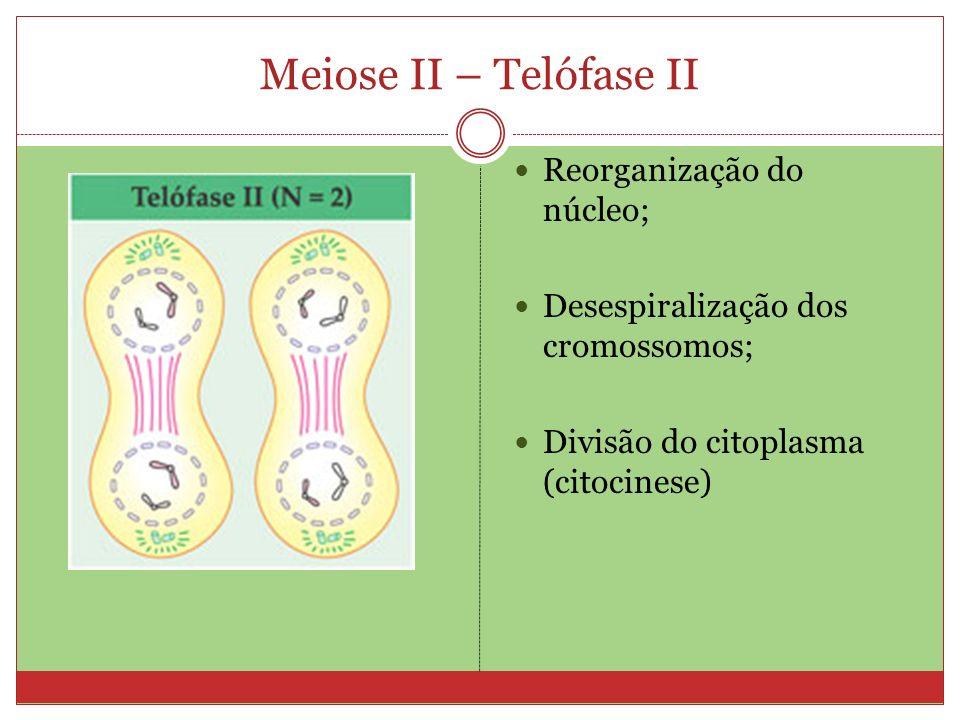 Meiose II – Telófase II Reorganização do núcleo; Desespiralização dos cromossomos; Divisão do citoplasma (citocinese)