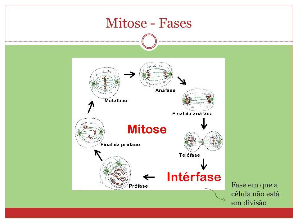 Meiose - fases Meiose I (Reducional – diminuição do número de cromossomos): - Prófase I - Metáfase I - Anáfase I - Telófase I Meiose II (Equacional – semelhante à mitose): - Prófase II - Metáfase II - Anáfase II - Telófase II