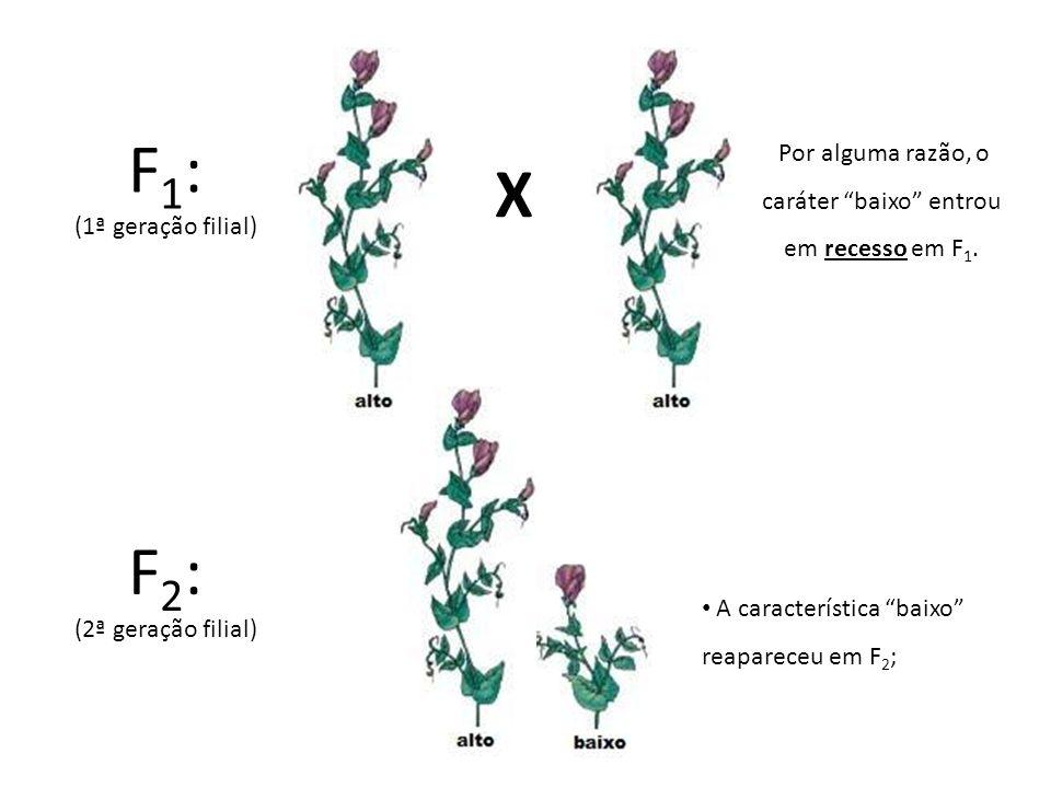 X F 1 : (1ª geração filial) F 2 : (2ª geração filial) A característica baixo reapareceu em F 2 ; Por alguma razão, o caráter baixo entrou em recesso e