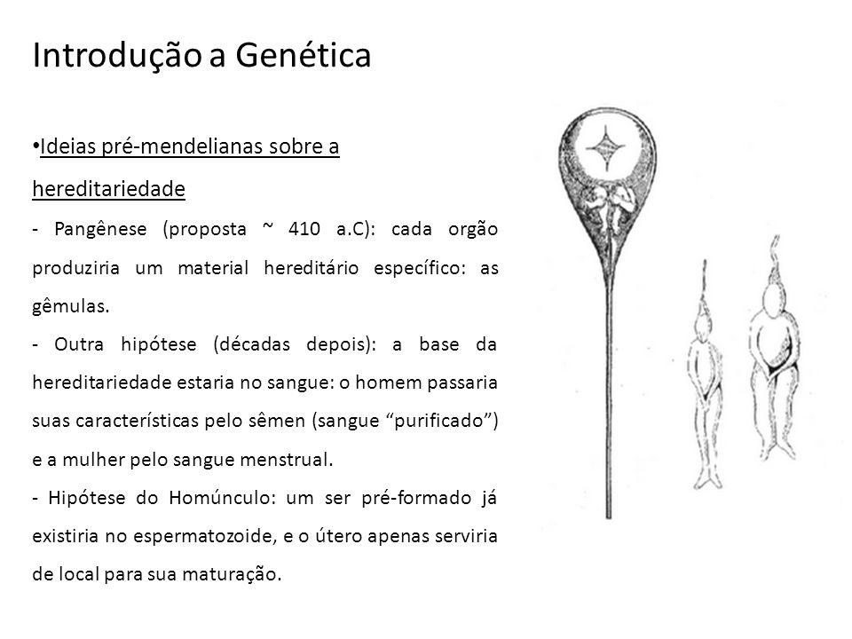 Introdução a Genética Ideias pré-mendelianas sobre a hereditariedade - Pangênese (proposta ~ 410 a.C): cada orgão produziria um material hereditário e