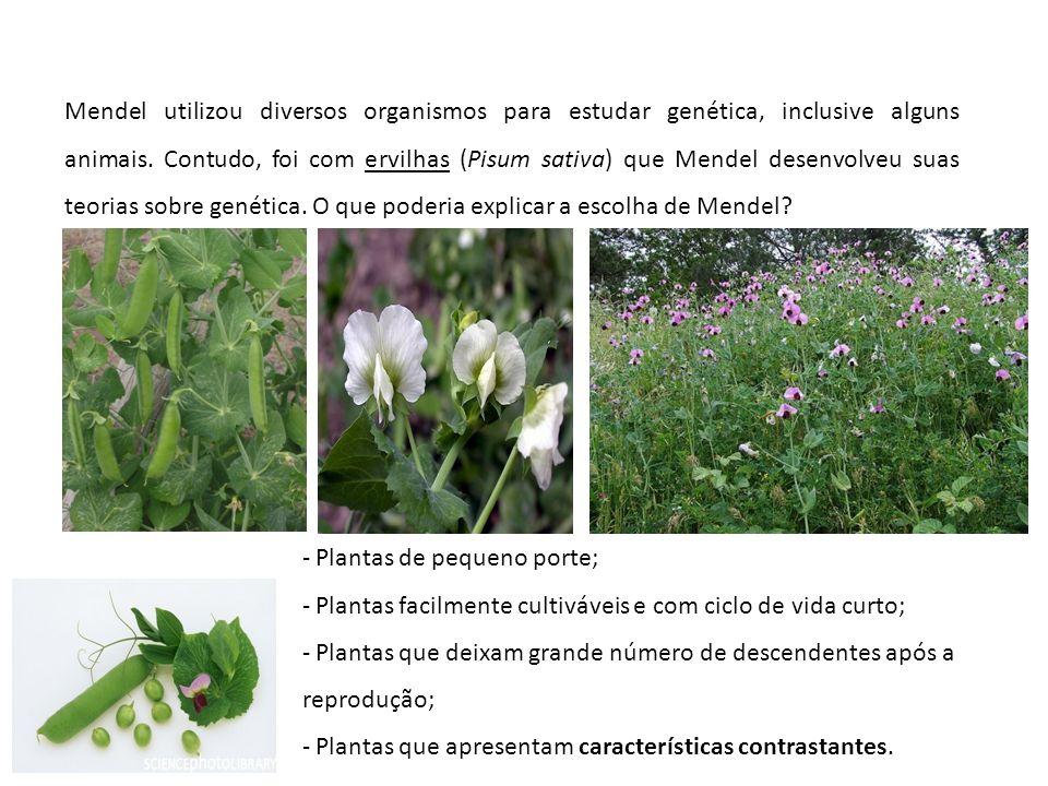Mendel utilizou diversos organismos para estudar genética, inclusive alguns animais. Contudo, foi com ervilhas (Pisum sativa) que Mendel desenvolveu s