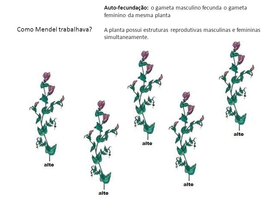 Auto-fecundação: o gameta masculino fecunda o gameta feminino da mesma planta. Como isso é possível? A planta possui estruturas reprodutivas masculina