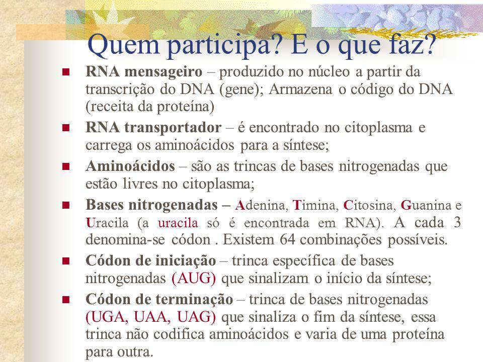 Quem participa? E o que faz? RNA mensageiro – produzido no núcleo a partir da transcrição do DNA (gene); Armazena o código do DNA (receita da proteína