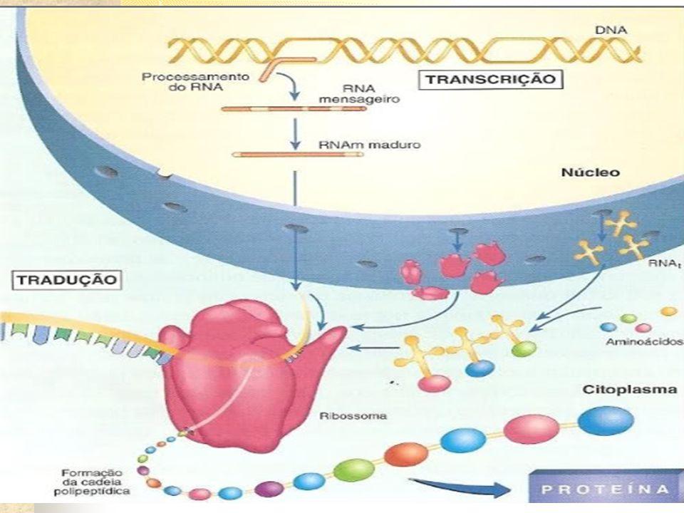Receita de bolo Proteína = Bolo DNA = receita em codificada e guardada no cofre RNAm = receita em português Ribossomo = confeiteiro Aminoácidos = ingredientes RNAt = motoboy RER = forno Citoplasma = cozinha