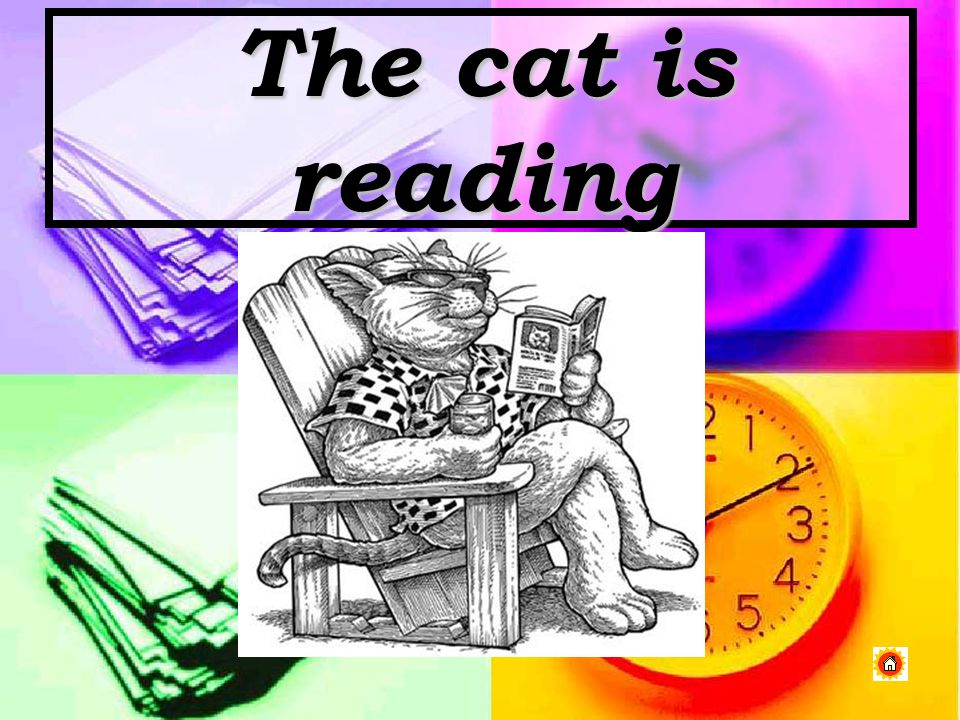 The cat is reading