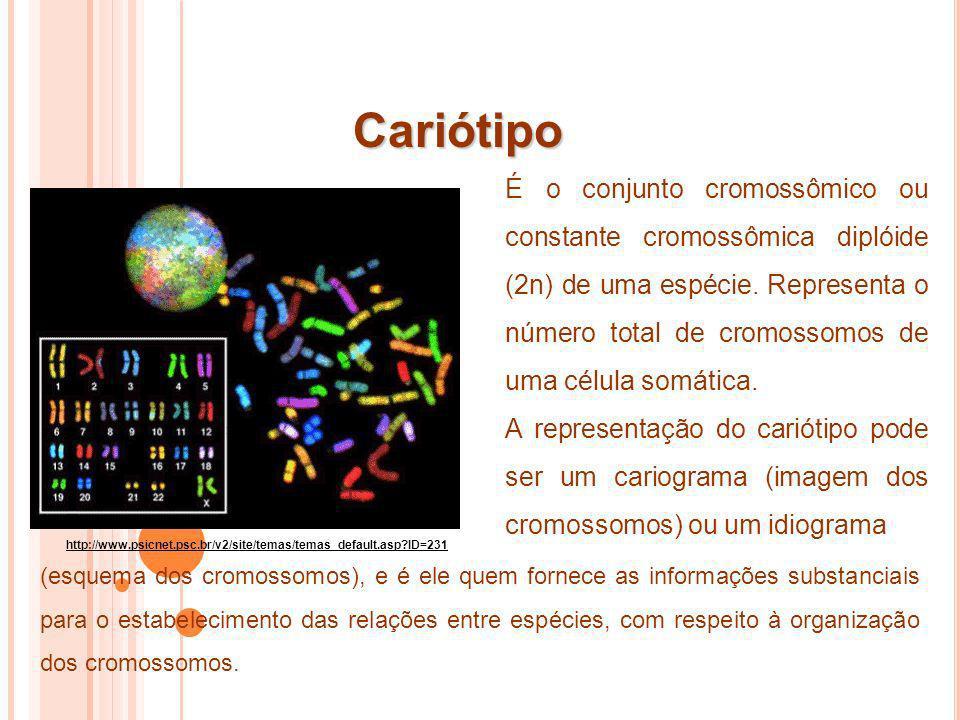 Cariótipo É o conjunto cromossômico ou constante cromossômica diplóide (2n) de uma espécie. Representa o número total de cromossomos de uma célula som