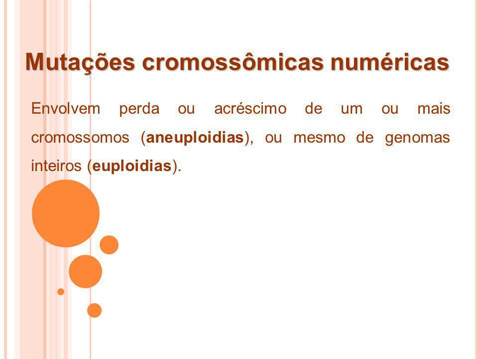 Mutações cromossômicas numéricas Envolvem perda ou acréscimo de um ou mais cromossomos (aneuploidias), ou mesmo de genomas inteiros (euploidias).