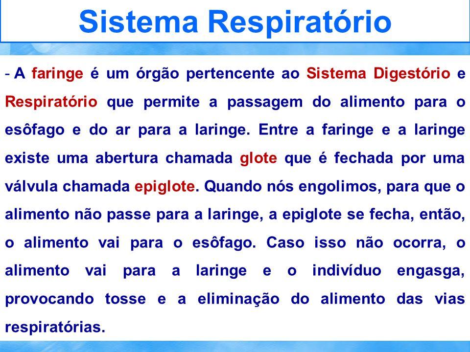 Sistema Respiratório - A faringe é um órgão pertencente ao Sistema Digestório e Respiratório que permite a passagem do alimento para o esôfago e do ar