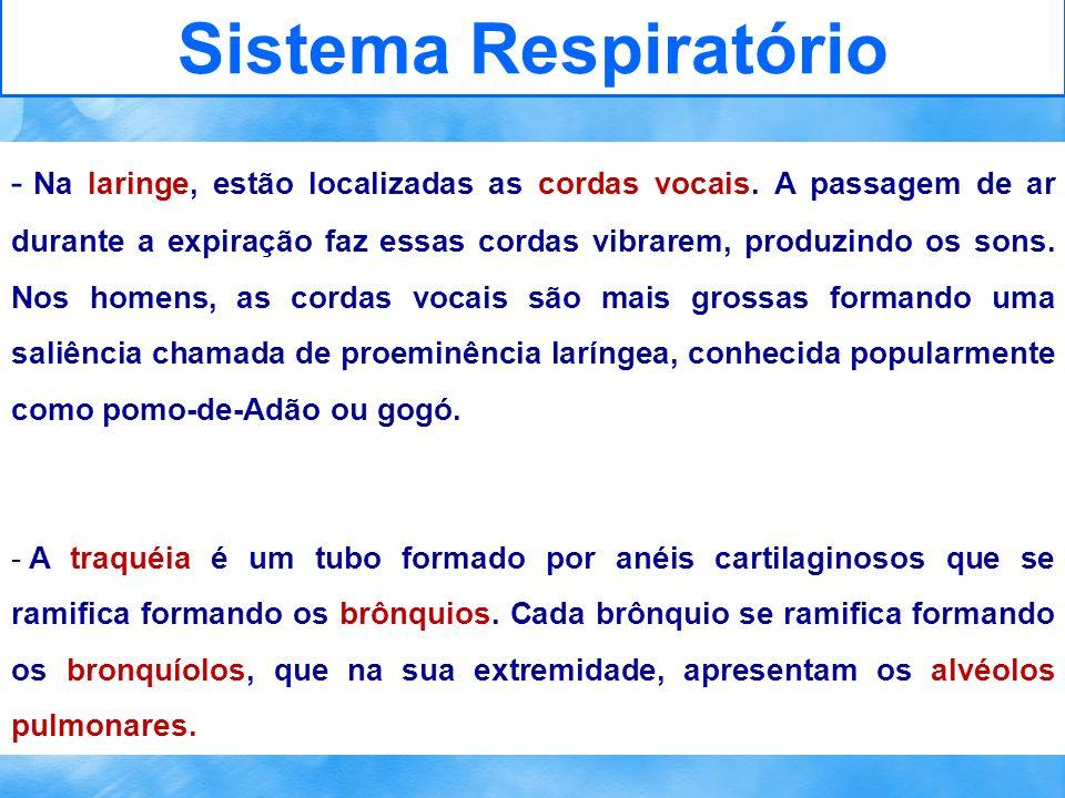 Sistema Respiratório - Na laringe, estão localizadas as cordas vocais. A passagem de ar durante a expiração faz essas cordas vibrarem, produzindo os s