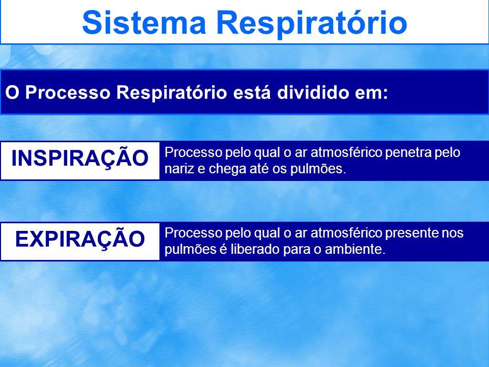 Sistema Respiratório FENÔMENOS QUE OCORREM DURANTE: Contração dos músculos intercostais Puxa as costelas para cima e para fora Diafragma contraí-se e abaixa Ocorre a expansão do tórax Diminui a pressão sobre os pulmões O ar entra nos pulmões INSPIRAÇÃO Relaxamento dos músculos intercostais Diafragma relaxa Caixa torácica diminui de volume Aumenta a pressão sobre os pulmões O ar saí dos pulmões EXPIRAÇÃO
