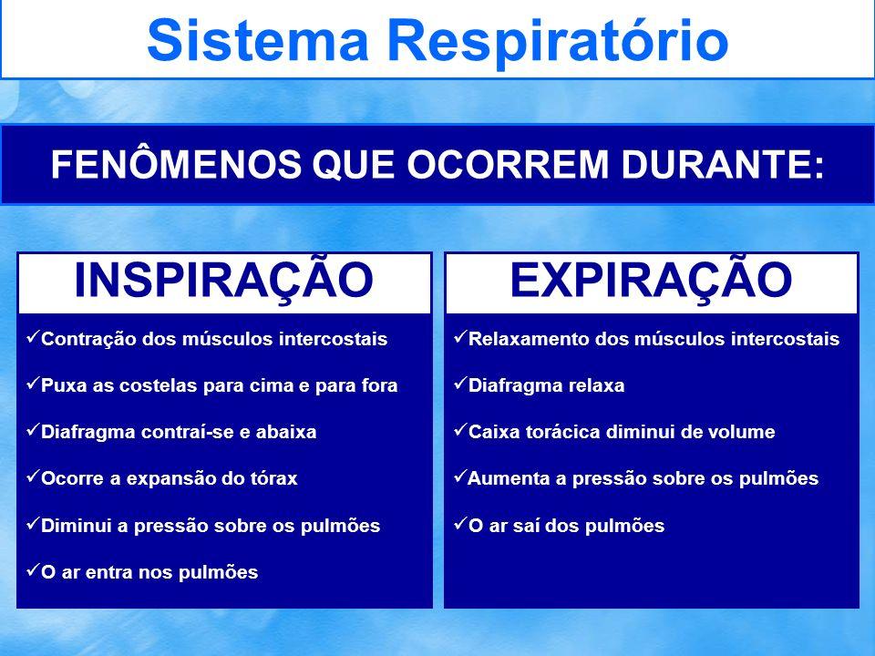 Sistema Respiratório FENÔMENOS QUE OCORREM DURANTE: Contração dos músculos intercostais Puxa as costelas para cima e para fora Diafragma contraí-se e