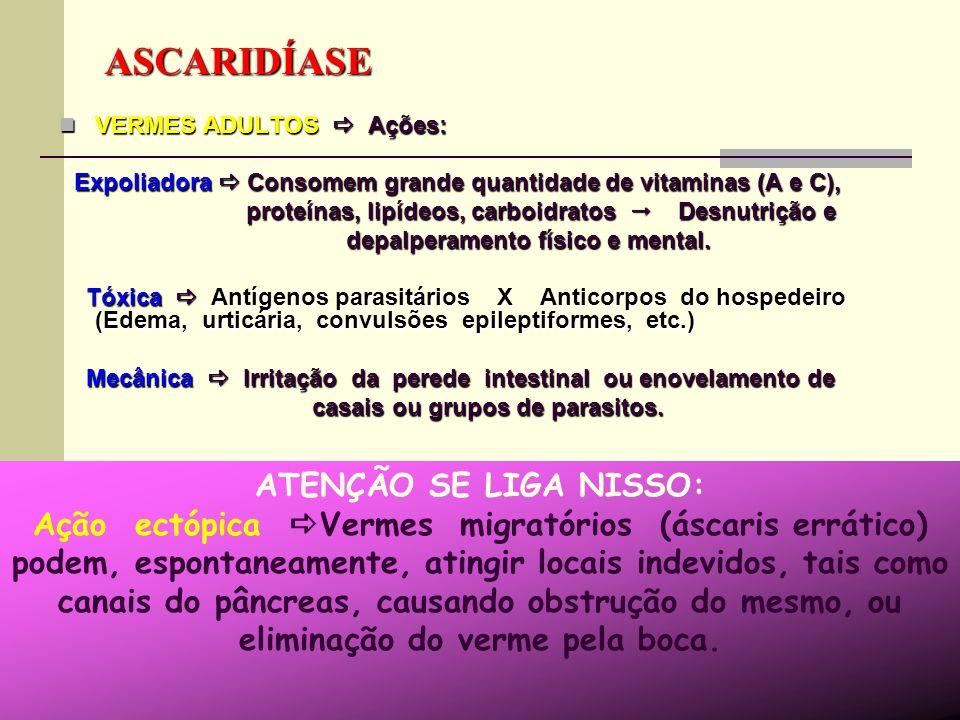NEMATODA: Ascaris lumbricoides ovo Intestino delgado