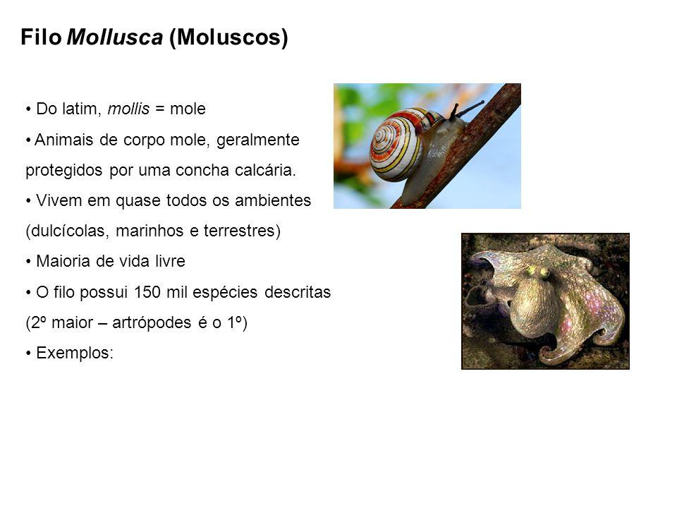 Filo Mollusca (Moluscos) Do latim, mollis = mole Animais de corpo mole, geralmente protegidos por uma concha calcária. Vivem em quase todos os ambient