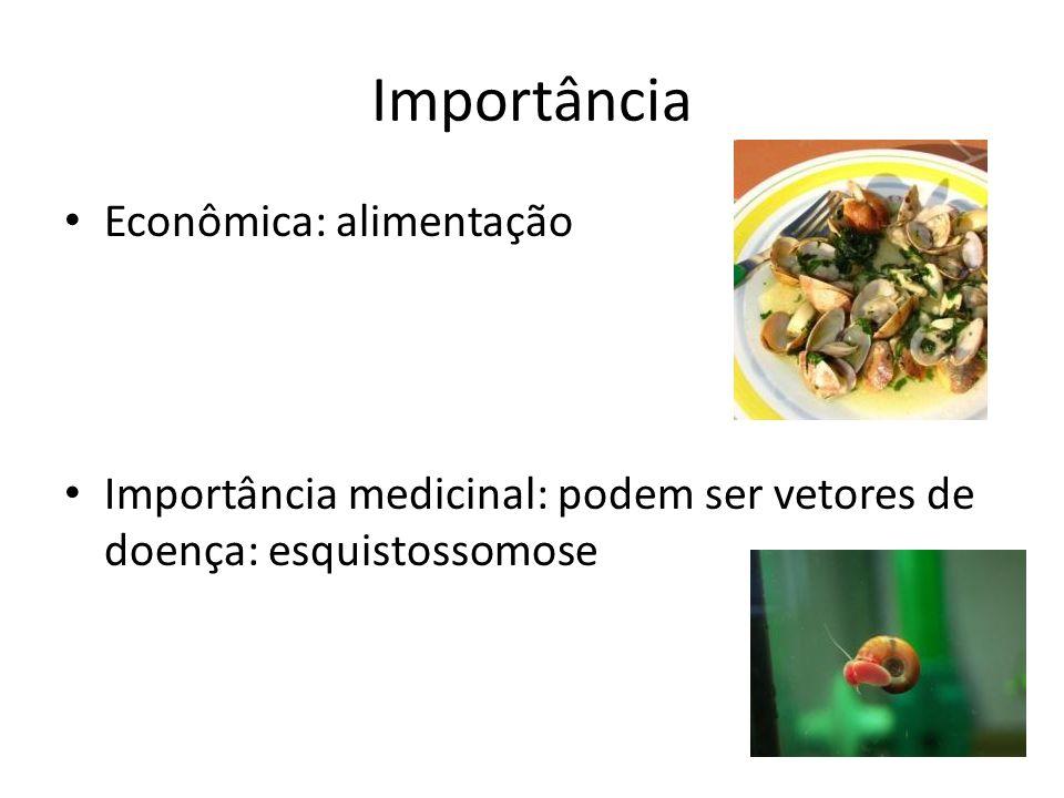 Importância Econômica: alimentação Importância medicinal: podem ser vetores de doença: esquistossomose