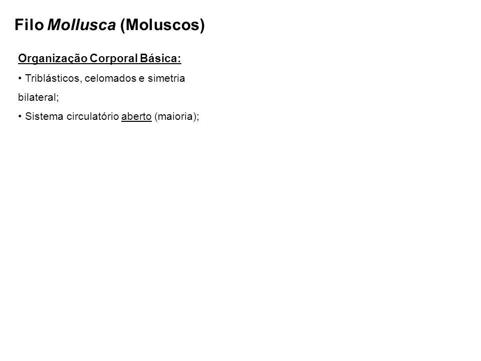 Filo Mollusca (Moluscos) Organização Corporal Básica: Triblásticos, celomados e simetria bilateral; Sistema circulatório aberto (maioria);