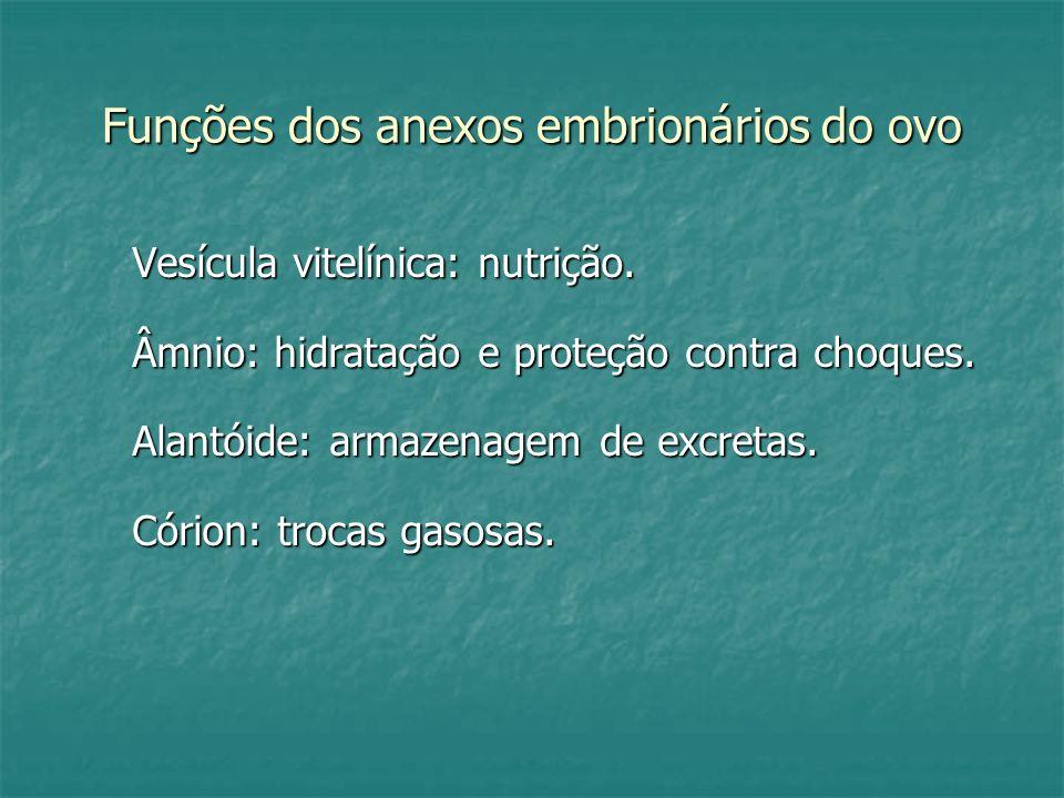 Funções dos anexos embrionários do ovo Vesícula vitelínica: nutrição. Âmnio: hidratação e proteção contra choques. Alantóide: armazenagem de excretas.
