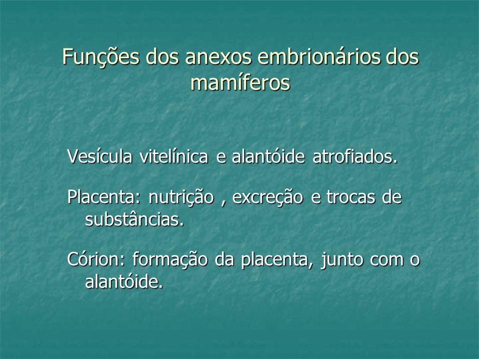 Funções dos anexos embrionários dos mamíferos Vesícula vitelínica e alantóide atrofiados. Placenta: nutrição, excreção e trocas de substâncias. Córion