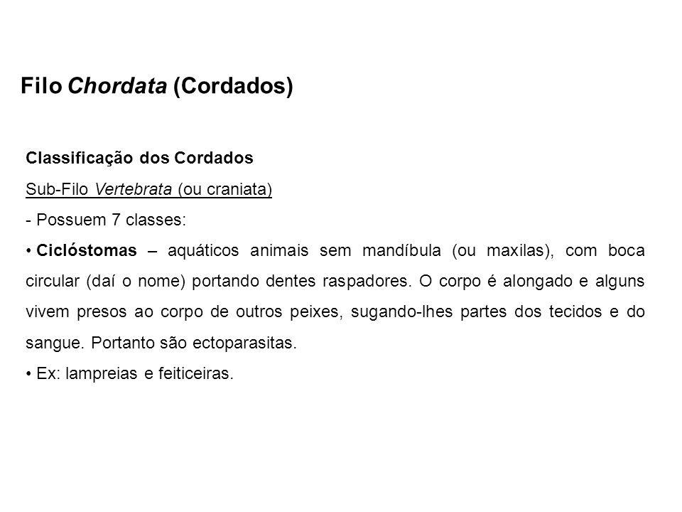 Filo Chordata (Cordados) Classificação dos Cordados Sub-Filo Vertebrata (ou craniata) - Possuem 7 classes: Ciclóstomas – aquáticos animais sem mandíbu