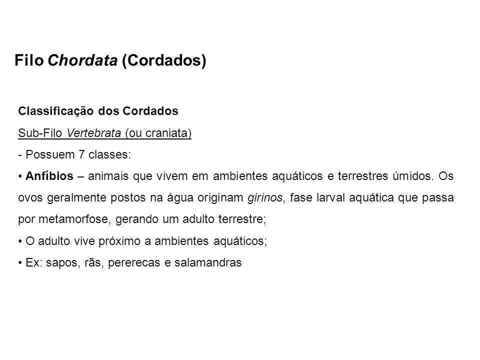Filo Chordata (Cordados) Classificação dos Cordados Sub-Filo Vertebrata (ou craniata) - Possuem 7 classes: Anfíbios – animais que vivem em ambientes a