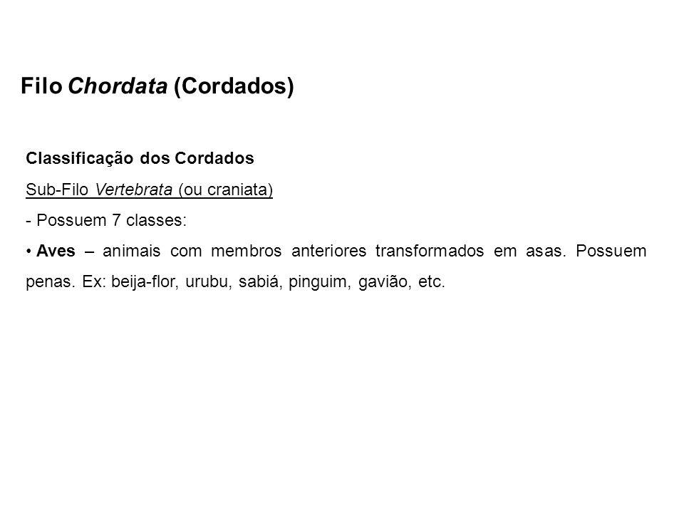 Filo Chordata (Cordados) Classificação dos Cordados Sub-Filo Vertebrata (ou craniata) - Possuem 7 classes: Aves – animais com membros anteriores trans