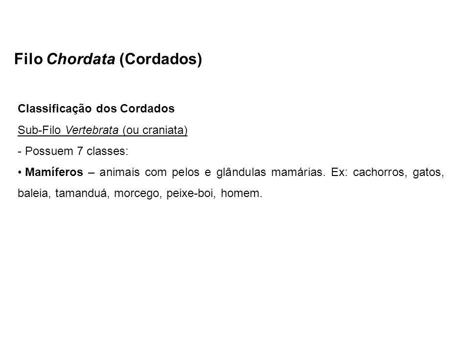Filo Chordata (Cordados) Classificação dos Cordados Sub-Filo Vertebrata (ou craniata) - Possuem 7 classes: Mamíferos – animais com pelos e glândulas m