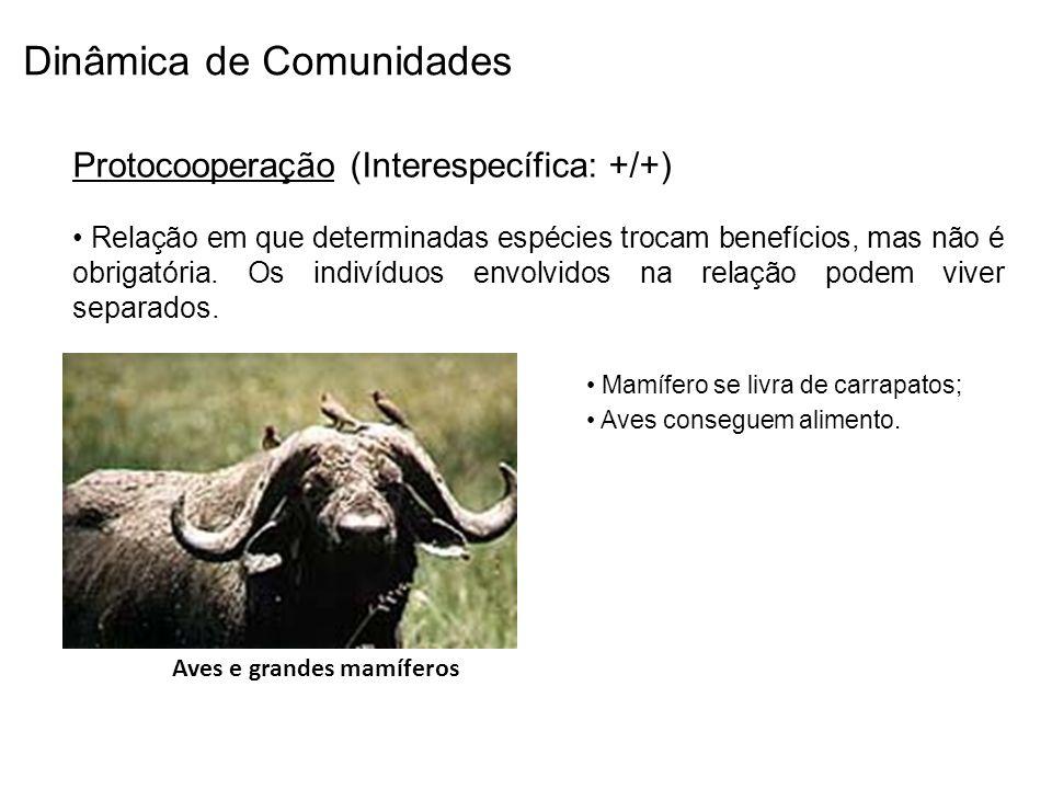 Dinâmica de Comunidades Protocooperação (Interespecífica: +/+) Relação em que determinadas espécies trocam benefícios, mas não é obrigatória. Os indiv
