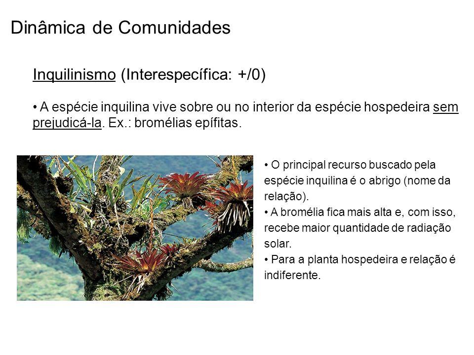 Dinâmica de Comunidades Inquilinismo (Interespecífica: +/0) A espécie inquilina vive sobre ou no interior da espécie hospedeira sem prejudicá-la. Ex.: