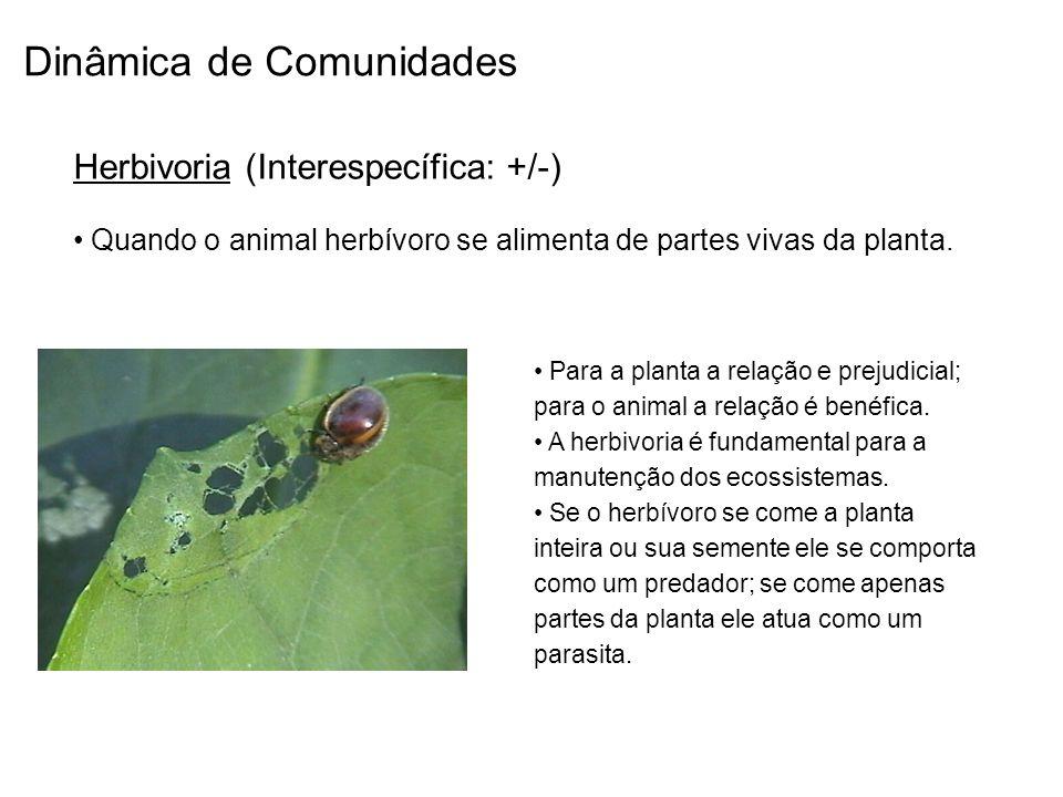 Dinâmica de Comunidades Herbivoria (Interespecífica: +/-) Quando o animal herbívoro se alimenta de partes vivas da planta. Para a planta a relação e p