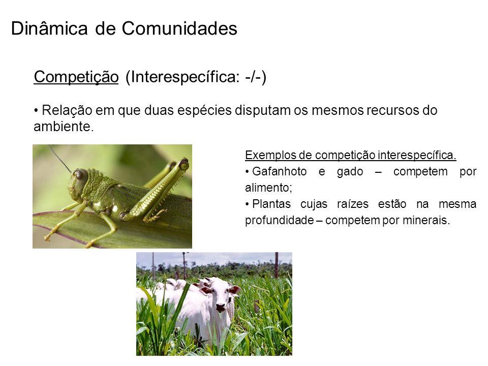 Dinâmica de Comunidades Competição (Interespecífica: -/-) Relação em que duas espécies disputam os mesmos recursos do ambiente. Exemplos de competição