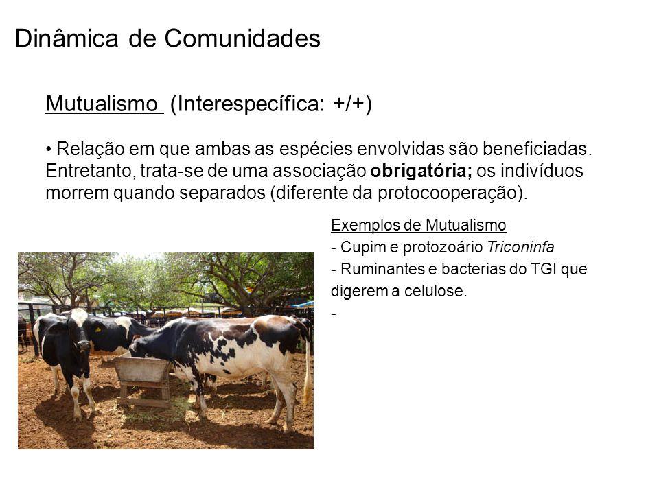 Dinâmica de Comunidades Mutualismo (Interespecífica: +/+) Relação em que ambas as espécies envolvidas são beneficiadas. Entretanto, trata-se de uma as