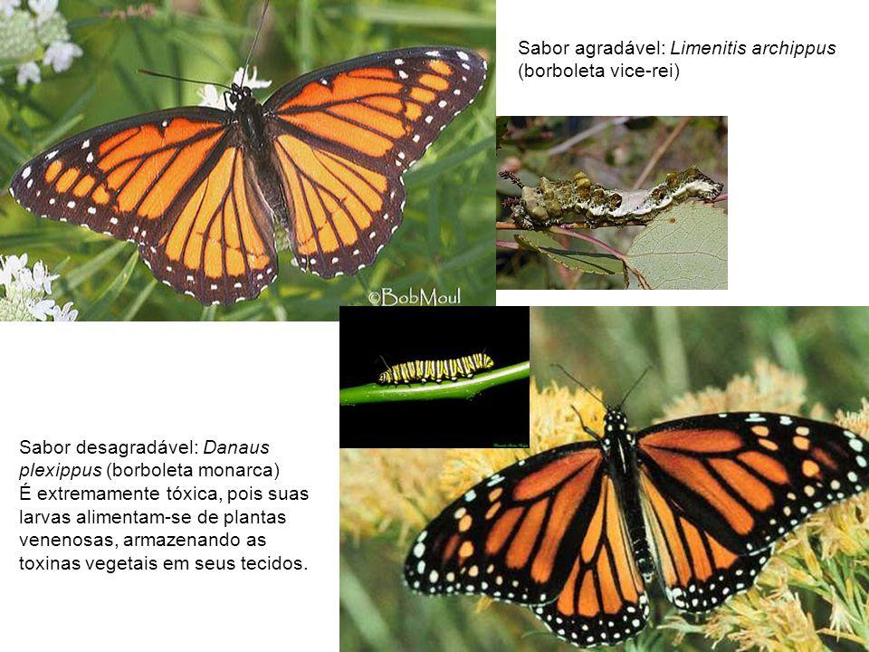 Sabor agradável: Limenitis archippus (borboleta vice-rei) Sabor desagradável: Danaus plexippus (borboleta monarca) É extremamente tóxica, pois suas la