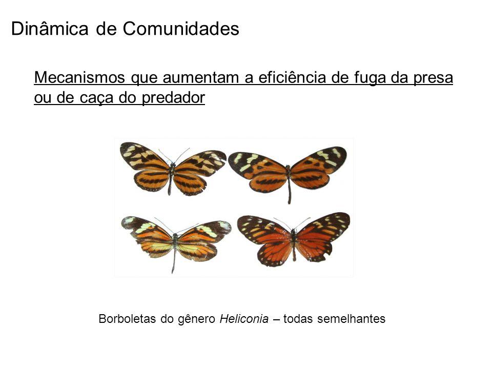 Dinâmica de Comunidades Mecanismos que aumentam a eficiência de fuga da presa ou de caça do predador Borboletas do gênero Heliconia – todas semelhante