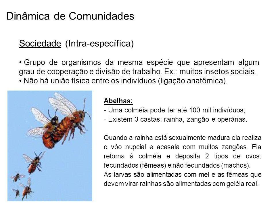 Dinâmica de Comunidades Sociedade (Intra-específica) Grupo de organismos da mesma espécie que apresentam algum grau de cooperação e divisão de trabalh