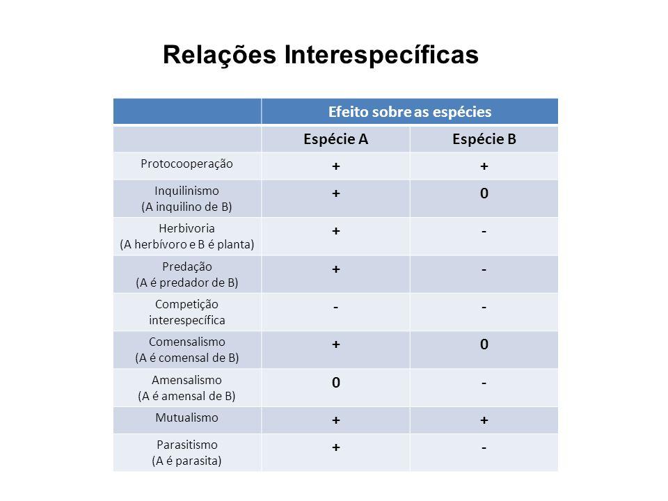 Efeito sobre as espécies Espécie AEspécie B Protocooperação ++ Inquilinismo (A inquilino de B) +0 Herbivoria (A herbívoro e B é planta) +- Predação (A
