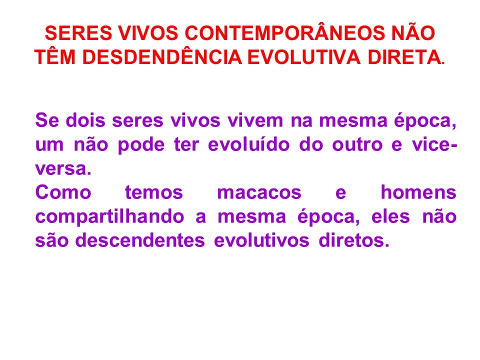 SERES VIVOS CONTEMPORÂNEOS NÃO TÊM DESDENDÊNCIA EVOLUTIVA DIRETA. Se dois seres vivos vivem na mesma época, um não pode ter evoluído do outro e vice-