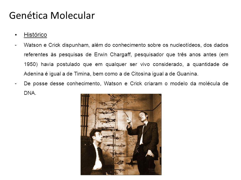 Genética Molecular Histórico -Watson e Crick dispunham, além do conhecimento sobre os nucleotídeos, dos dados referentes às pesquisas de Erwin Chargaf